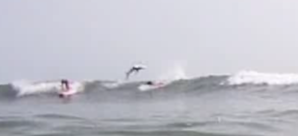 Shark jumps over surfers off Florida Coast