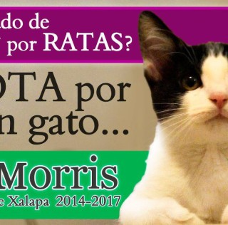 Morris the Cat Runs for Mayor of Mexican City