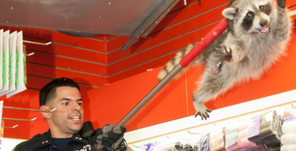 Raccoon Bronx Beauty Shop